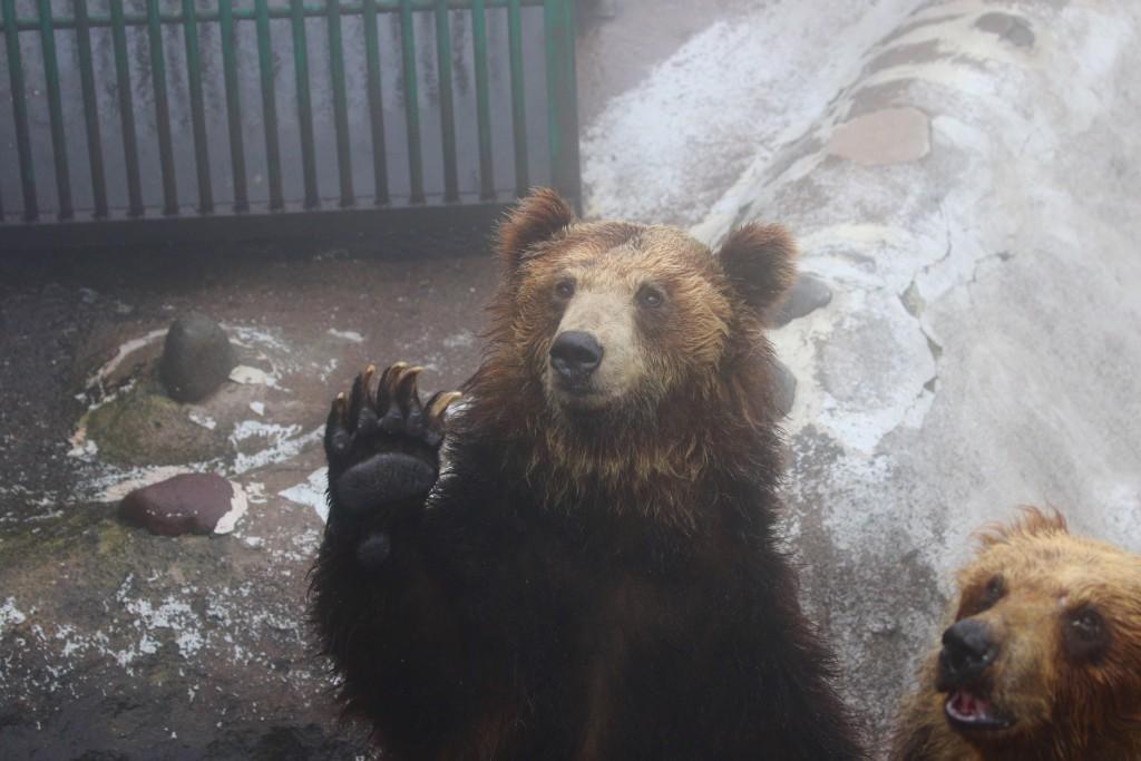 bear17.06.04011