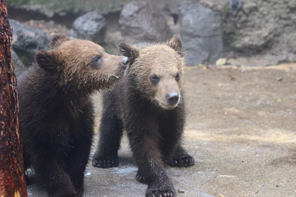 bear17.06.04030